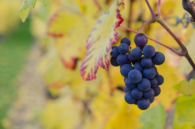 Alma-, körte- és szőlőszezon- mennyi a javasolt mennyiség ezekből?